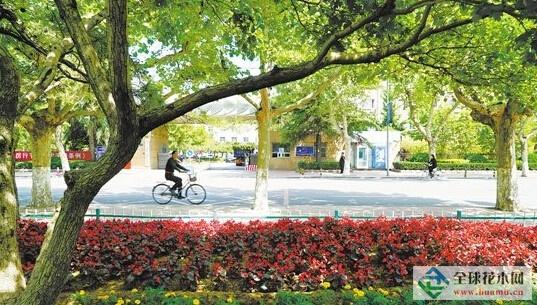 唐山:为迎2016世园会增加绿化层次