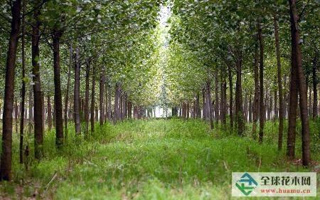 山东:高唐清平镇绿化造林掀热潮
