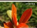 2011年10月期刊总第10期《天府花卉园艺》 (35)