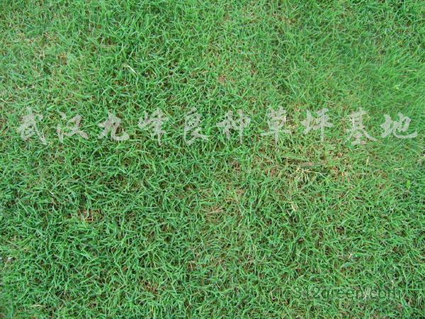 供应咸宁草坪