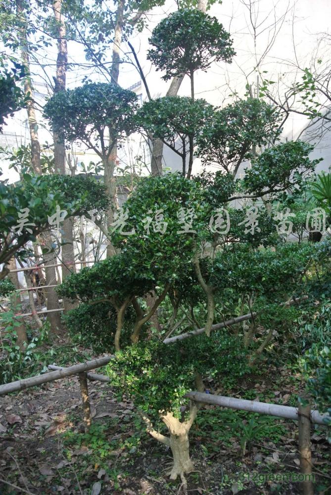供应花木、景观树